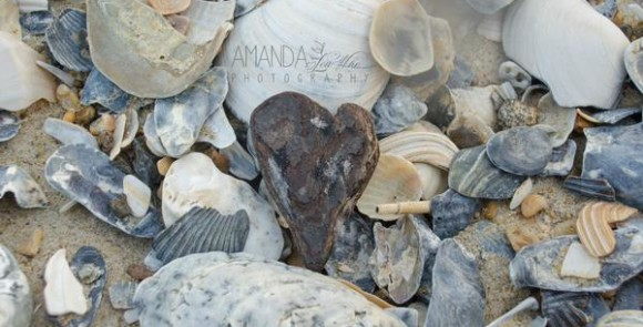 a driftwood heart among seashells